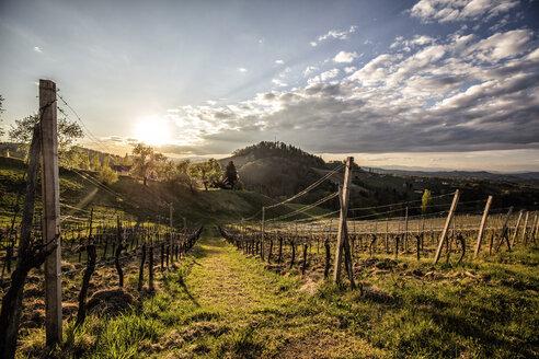 Austria, Styria, Ratsch an der Weinstrasse, vineyard - DAWF00523