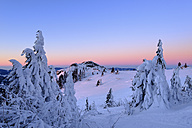 Germany, Bavaria, Bavarian Forest in winter, Bodenmaiser Riegel, snow-capped spruces in the morning - SIEF07413