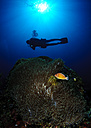 Philippines, Dumaguete, diver in the sea - TOVF00076