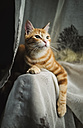 Portrait of tabby cat on the backrest of a couch - RAEF01857
