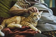 Hand of senior woman stroking tabby cat - RAEF01859