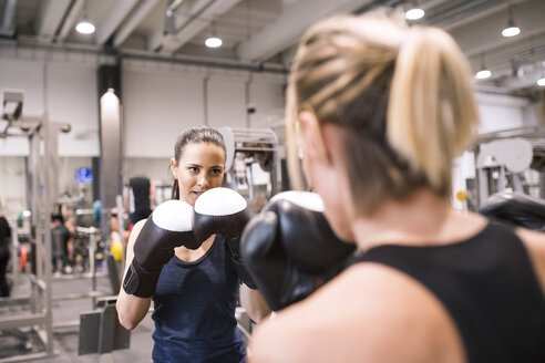 Young women boxing in gym - HAPF01549