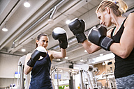 Young women boxing in gym - HAPF01552