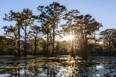 USA, Texas, Louisiana, Caddo Lake State Park, Saw Mill Pond, bald cypress forest - FOF09253