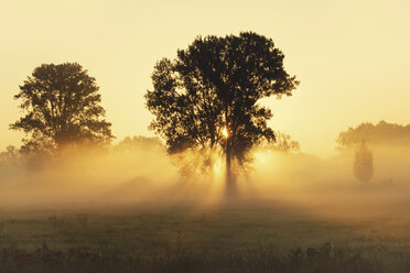 Trees on a meadow with early morning haze at sunrise - BSTF00109