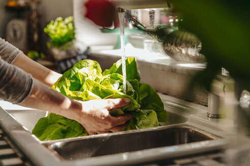 Washing lettuce in kitchen - JOSF00805