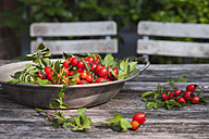 Tin bowl of rosehips on garden table - GWF05205