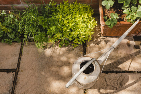 Watering can next to plants - NMSF00121