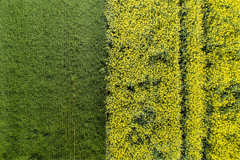 Germany, Bavaria, Aerial view of rape fields - MAEF12199
