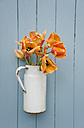 Old milk can with orange tulips in front of wooden wall - GISF00286