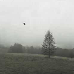 Tree on field in winter - DWIF00853