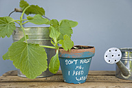 Potted zucchini plant with reminder - GISF00288