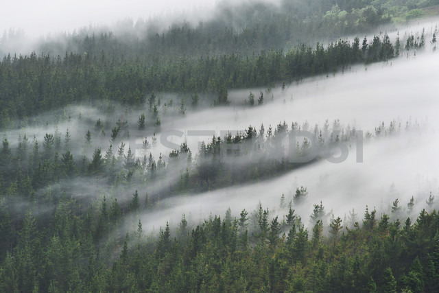 Spain, Basque Country, mist in the forest of Oiz - DHCF00078