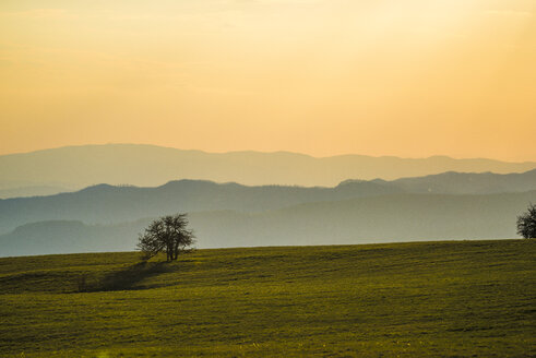 Italy, Marche, Petrano Mountain, single tree at sunset - LOMF00576