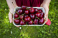 Girl's hands dress holding cardboard box of cherries, close-up - LVF06176