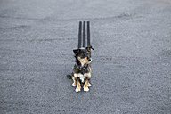 Skidmark behind dog sitting on the road - PSTF00055