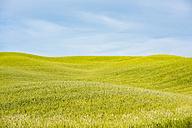 Italy, Tuscany, Val d'Orcia, field landscape - LOMF00584
