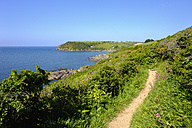 UK, England, Cornwall, coast path near Polperro - SIEF07445