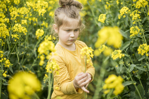 Girl examining plant in rape field - MOEF00007