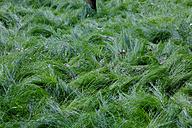 Green grass - JTF00823