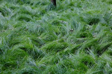 Green grass - JTF00823
