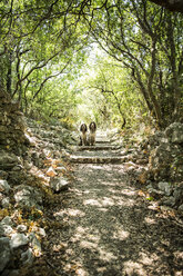 Two English Springer Spaniels sitting on a path - MAEF12355