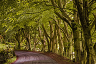 UK, England, tree-lined country road - FCF01206