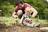 Father with his little son in the garden planting seedlings - HAPF02005