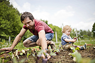 Father with his little son in the garden planting seedlings - HAPF02008