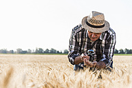 Senior farmer in a field examining ears with magnifier - UUF11171