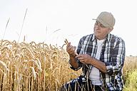 Senior farmer in a field examining ears - UUF11186