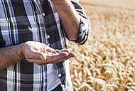 Senior farmer's hand holding wheat grains, close-up - UUF11189