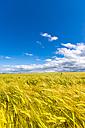 Barley field - SMAF00795