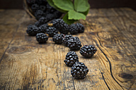 Organic blackberries on wood - LVF06236