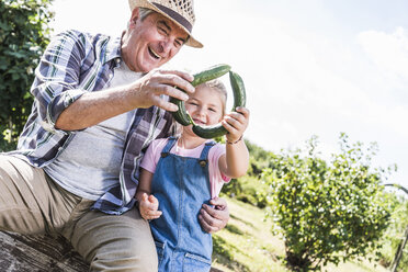 Happy grandfather and granddaughter holding cucumbers in the garden - UUF11323