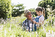 Grandfather and granddaughter in lavender field - UUF11326