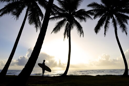 Dominican Rebublic, silhouette of palms and man with surfboard at sunset - ECPF00005