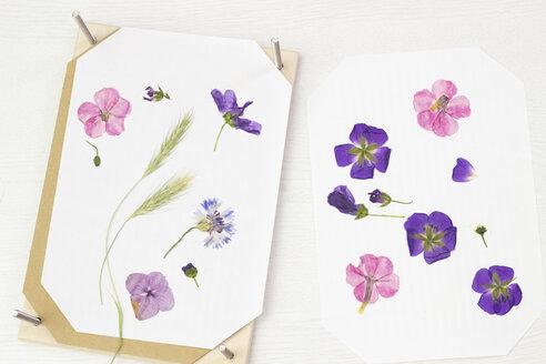 Pressing flowers - CMF00702