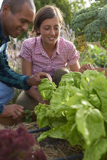 Young farmers harvesting lettuce - PACF00058