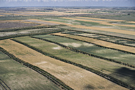 USA, Farm fields with tree beauty strips in Western Nebraska - BCDF00318