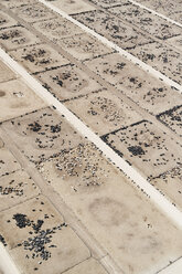 USA, Aerial photograph of Beef Cattle feed lot near Greeley, Colorado - BCDF00324