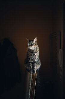 Portrait of a tabby cat - RAEF01904