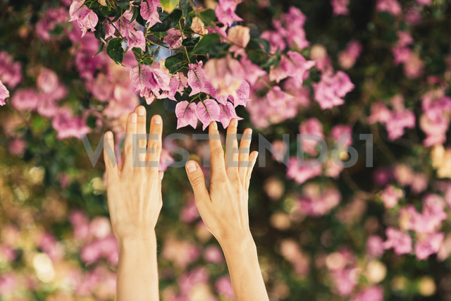 Woman's hands reaching for pink blossoms - JPF00269