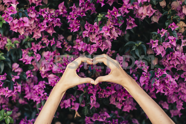 Woman's hands shaping heart in front of pink blossoms - JPF00272 - Javier Pardina/Westend61