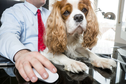Businessman sitting at desk working with dog on his lap - PUF00670