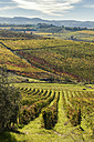 Italy, Tuscany, vineyard in the Province of Siena - CSTF01338