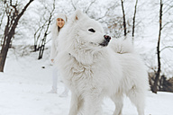White dog in snow with smiling owner watching from the background - ZEDF00823