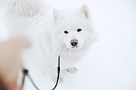 Portrait of white dog in the snow - ZEDF00826