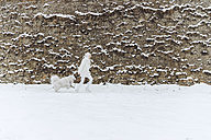 Young woman going walkies with her dog in the snow - ZEDF00829