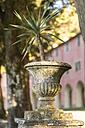 Italy, Liguria, Cinque Terre, Monterosso, plant in amphora at Santuario Nostra Signora di Soviore - CSTF01375